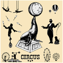 Circus and amusement park vector illustrations. Circus seal