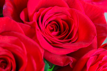 Close up of red roses.