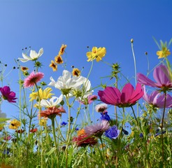 Fototapete - Grußkarte - bunte Blumenwiese - Sommerzeit