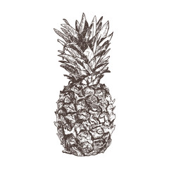 Pineapple hand drawn in sketch style, isolated on white backgrou