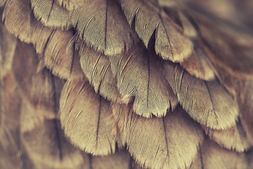 plumage background Wall mural