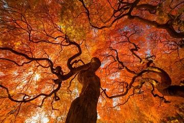An autumn tree.