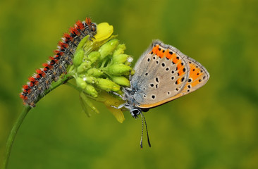 A caterpillar and a butterfly on a plant.