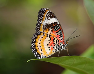 Colorful butterfly perching on leaf