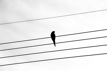 Silhouette of a bird on power lines.