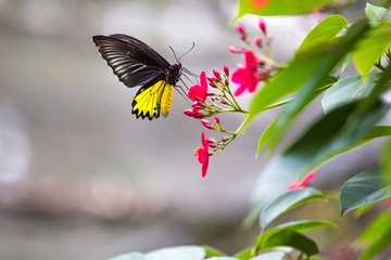 A butterfly perched on a flower in Bali, Indonesia.