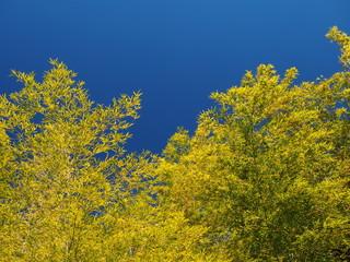 竹林と青空