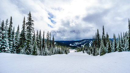 Skiing in a Winter Landscape in the High Alpine on the Hills surrounding the Alpine Village of Sun Peaks in the Shuswap Highlands of central British Columbia, Canada