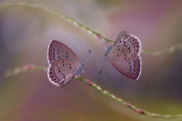 butterflies sitting on a grass wild flower with with a smooth background. image