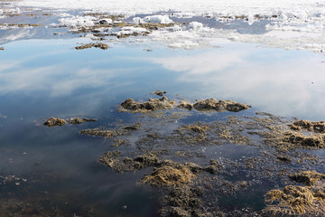 Algae and ice on the thawing lake in the spring, Baikal, Siberia