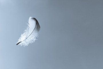 Feather floating in the sky. Peace, relaxation and dream concept.