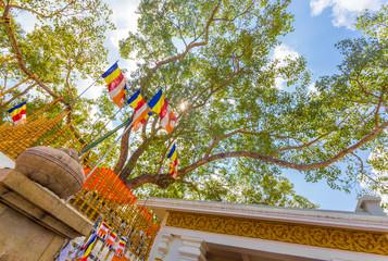 Anuradhapura Jaya Sri Maha Bodhi Tree Base H