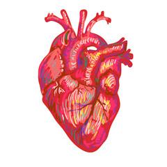 Human heart sketch design. Medical anatomical art. Coronal arter