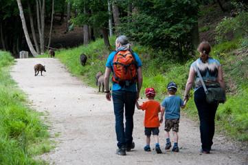 Spaziergänger zwischen Wildschweinen