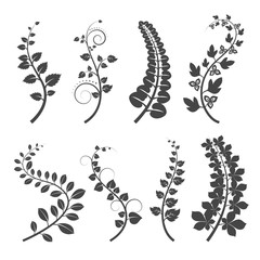 Wall Mural - Curly branches with leaves silhouettes on white background