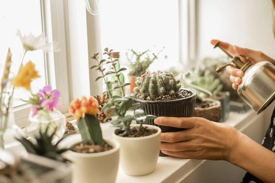 Girl tending plants on a sunny windowsill.