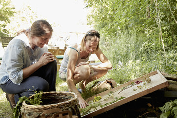 Two women looking at a selection of suitable natural plants and flowers for foraging. A summer garden.