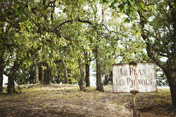 Countryside scene, an orchard with old fruit trees. A faded sign.