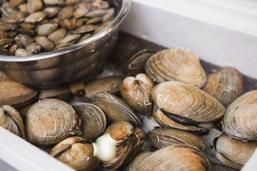 Fish market in Asia. Clams in water.