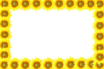 frame sunflower on isolated