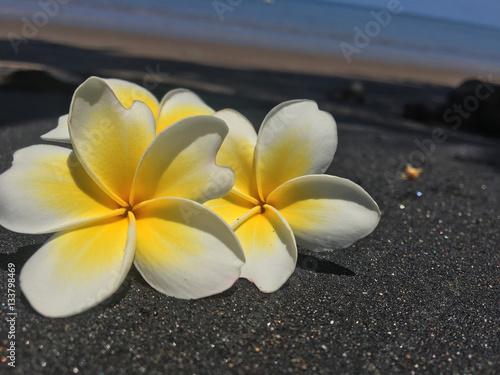 Fleur De Tiare Frangipanier Magnifique Stock Photo And Royalty
