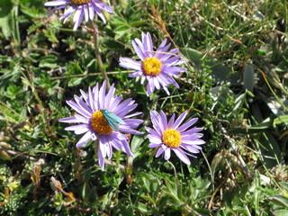 Fiori lilla con farfalla azzurra