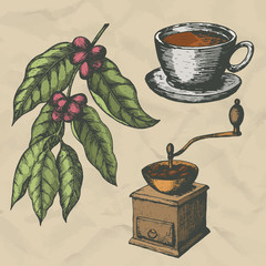 A branch of coffee, vintage coffee grinder and a cup of coffee. Hand drawn engraving style. Vector illustration.