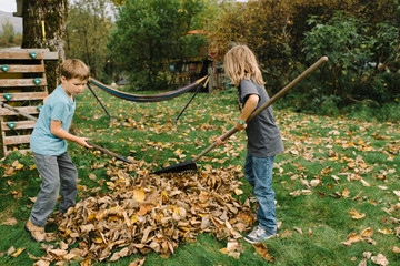 Young brothers tidying autumnal leaves
