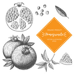 Pomegranate vector illustration. Hand-drawn design element. A fruit drawn in vintage style
