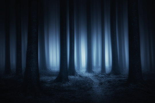 dark and scary forest at night