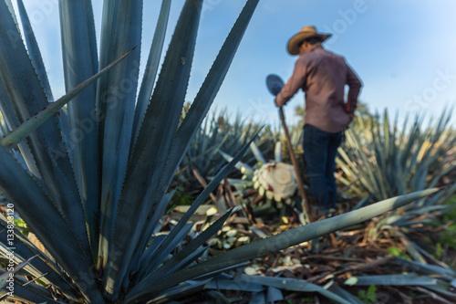Contrapicada de campesino cortando agave