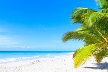 Palms grow on white sandy beach