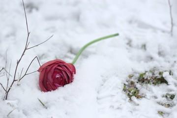 flower on the snow