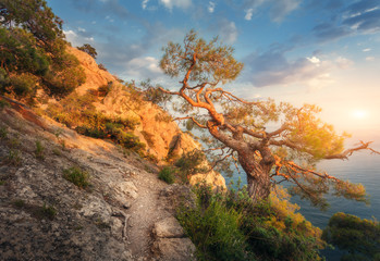 Wall Mural - Tree on the mountain at sunrise. Colorful landscape with old tree, sea, trail, rocks and sunny sky with clouds. Summer forest in the morning. Travel in Crimea. Nature background