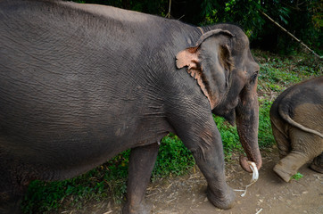 Mit dem Elefant auf Wanderschaft