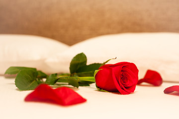 Single red rose on a bed.