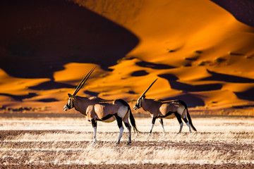 Oryx and dunes - Sossusvlei - Namibia Wall mural