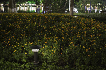 Small Garden Lamp on surrounded yellow daisy flowers