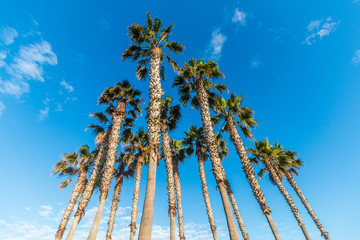 Triangular grouping of palm trees with background of blue sky and clouds.