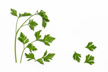 fresh parsley stalks isolated on white background