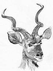 antelope head sketch hand drawn illustration