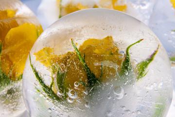 Gelbe Rose in kristallklarem Eis 3