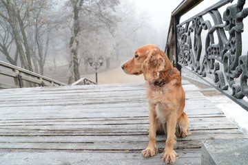 dog on old stairs