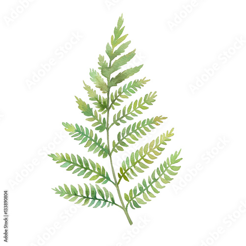 Watercolor fern leaf hand painted greenery branch for Watercolor greenery