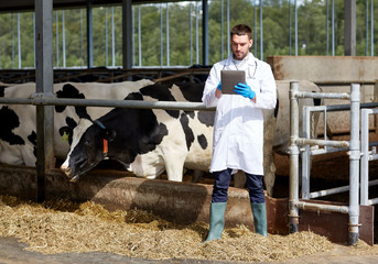 veterinarian with tablet pc and cows on dairy farm