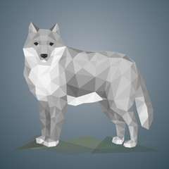 Low poly wolf. Illustrationin polygonal style. Beautiful forest animal on gray background.