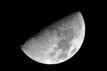 Carolina half moon