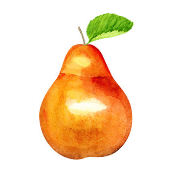 Sweet Pear. Autumn fruit. Watercolor illustration. Eco food