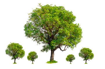 Isolated trees on white background.
