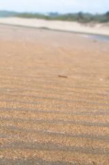 Beach sand ripples